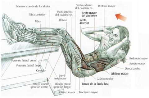 Como puedo hacer abdominales